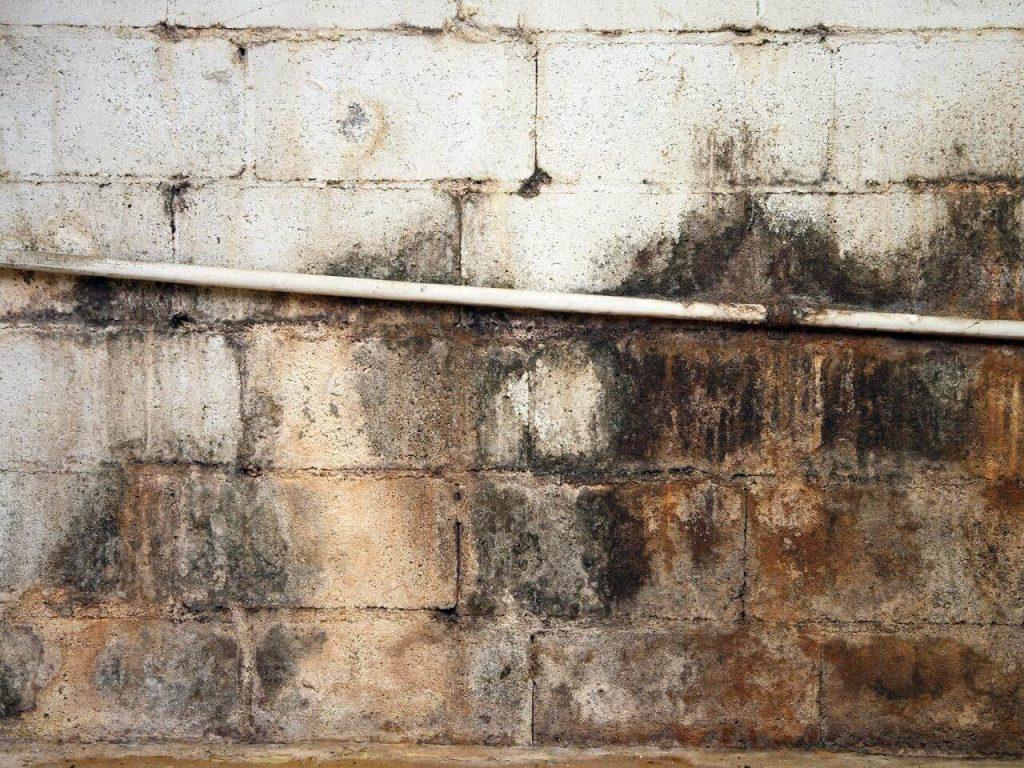 dry_fast_property_restoration_black_mold_removal_nj